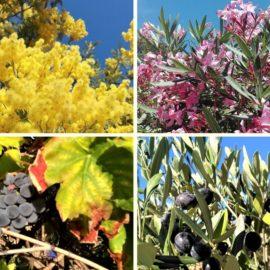 Les saisons- Die Jahreszeiten