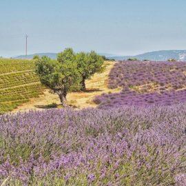 La Provence- Die Provence